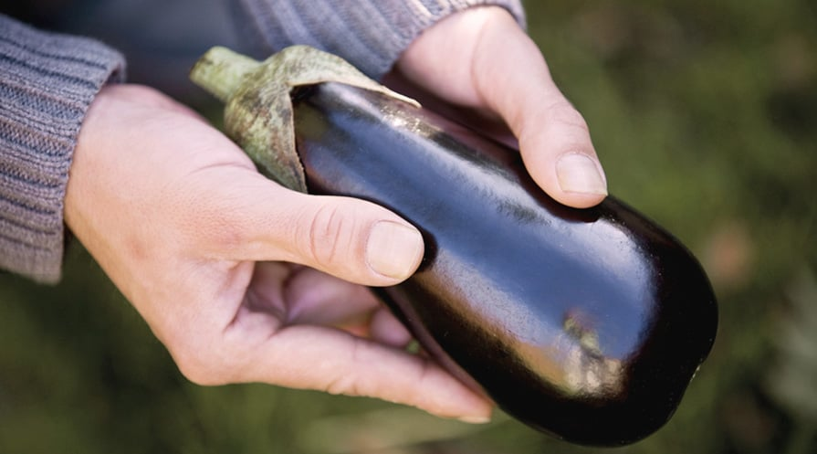 hands holding an eggplant